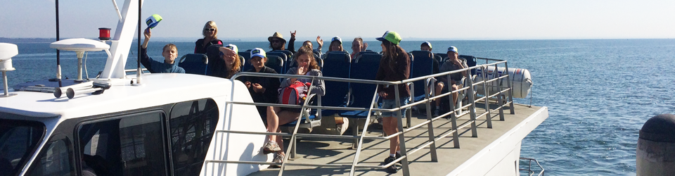 Inter-island Ferry Trips and Tours Phillip Island to French island